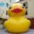 For public photo taking giant inflatable yellow duck