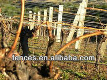 Design to terminate fence or trellis wire vineyard grape post