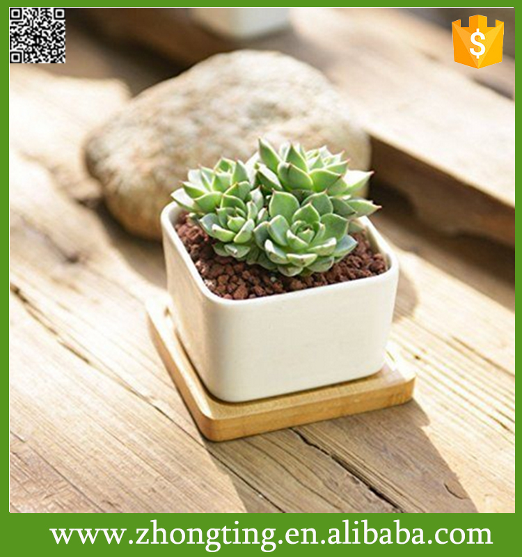 Modern White Ceramic Succulent Planter Saucer mini kids flower pot