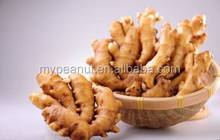 New crop dehydrated ginger with high quality