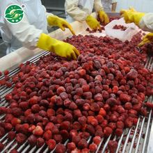 Long-term Grade A iqf frozen fruit frozen organic strawberry