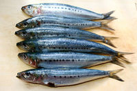 Best Canned Frozen Sardine Fish with best offer