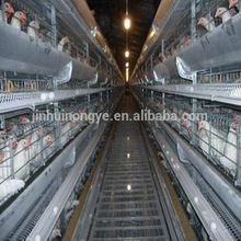 Agricultural equipment with 90 birds per units chicken laying cage for sale