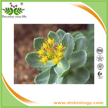 ISO9001 Factory supply Rhodiola Rosea extract Rosavins 1% Rhodiola Rosea powder