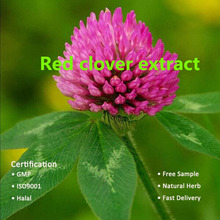 GMP factory steadily supply natural product for Red clover extract