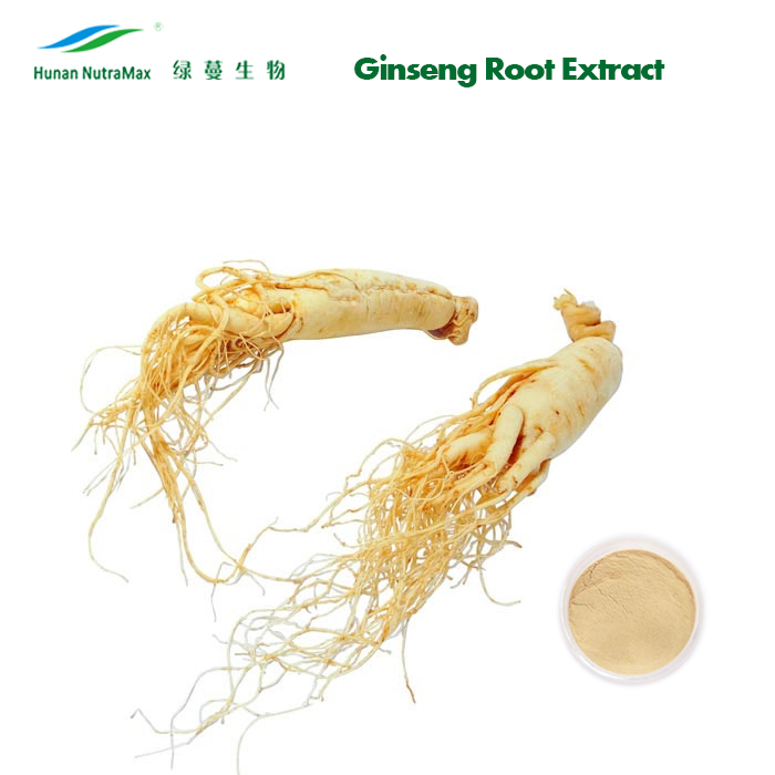China Supplier 100% Pure Panax Ginseng Root Extract Ginsenosides Powder