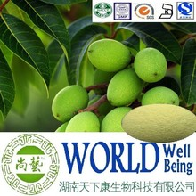 Hot sale Olea Europaea extract/Oleanolic acid 98%/Caryophyllin/Antihyperlipidemic plant extract
