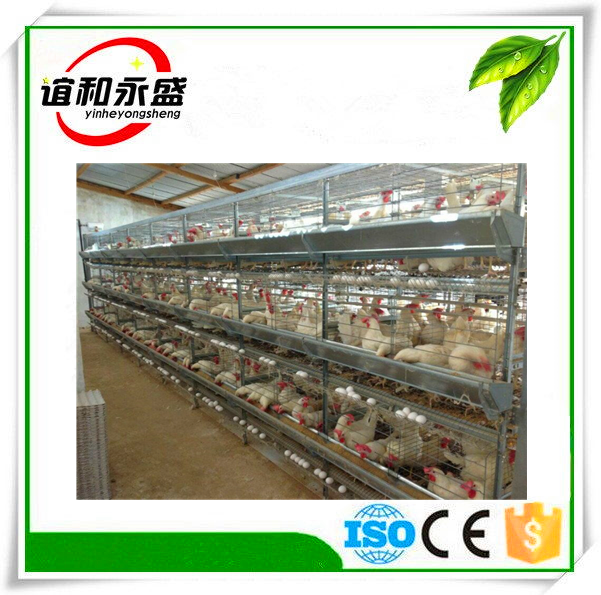 YHYS-4 floor automatic chicken layer cage/Poultry Farm House/quailcage