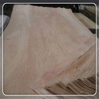 Natural Wood Veneer Poplar/Pine/Red Hardwood/Bintangor/Okume/Red Cedar Face Veneer