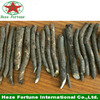 /product-detail/promising-farming-alternative-paulownia-roots-cutting-planting-60443991625.html