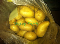 FRESH EGYPTIAN POTATO