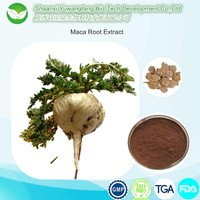 Maca Extract long time sex medicine