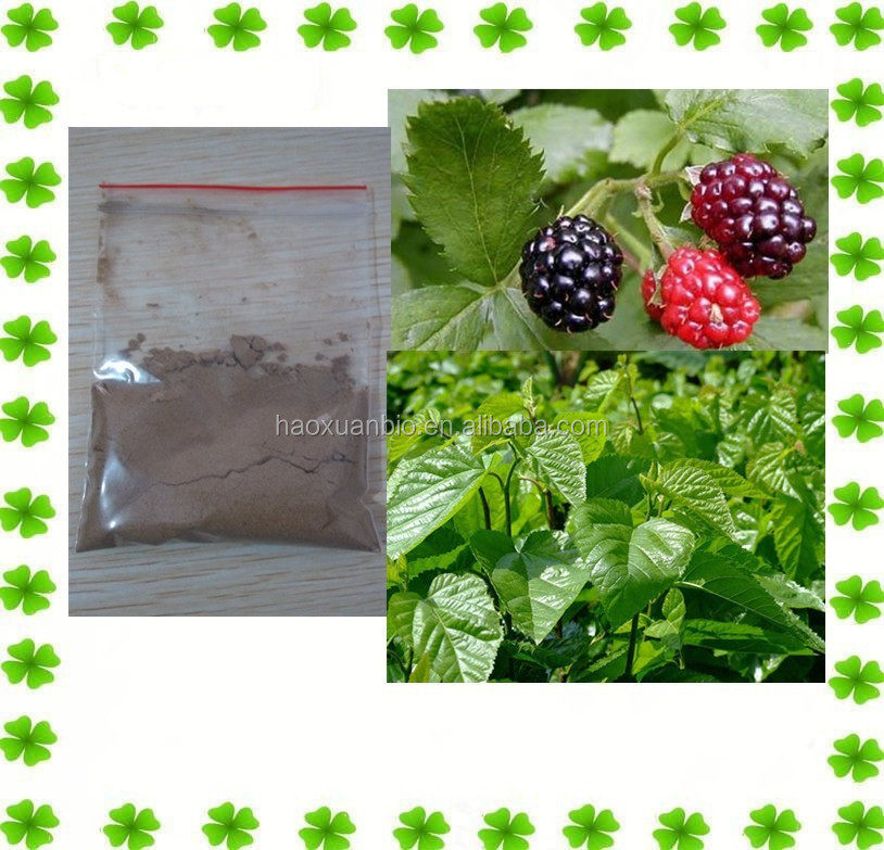 Mulberry extract DNJ 1-deoxynojirimycin for diabetes treatment