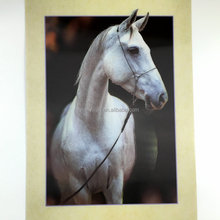 High quality horse office decoration picture 3D lenticular picture moving