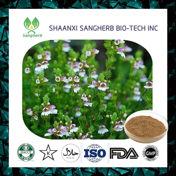 best price Best Eyebright Extract with flavone 45% manufactured in China