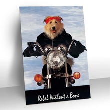 3D dog riding motorcycle pictures of plastic products