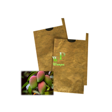 mango fruit protection growing bags