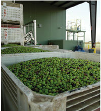 Olive Oil Recovery Machines and Olive Oil Process Lines