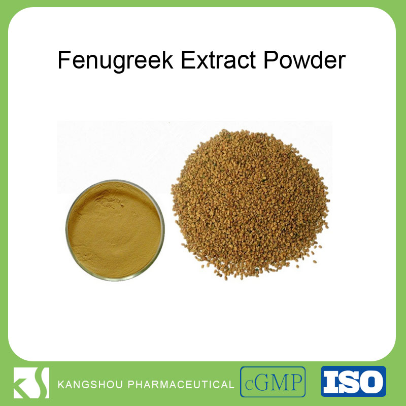 High quality Fenugreek seed powder,Fenugreek extract, Fenugreek extract powder