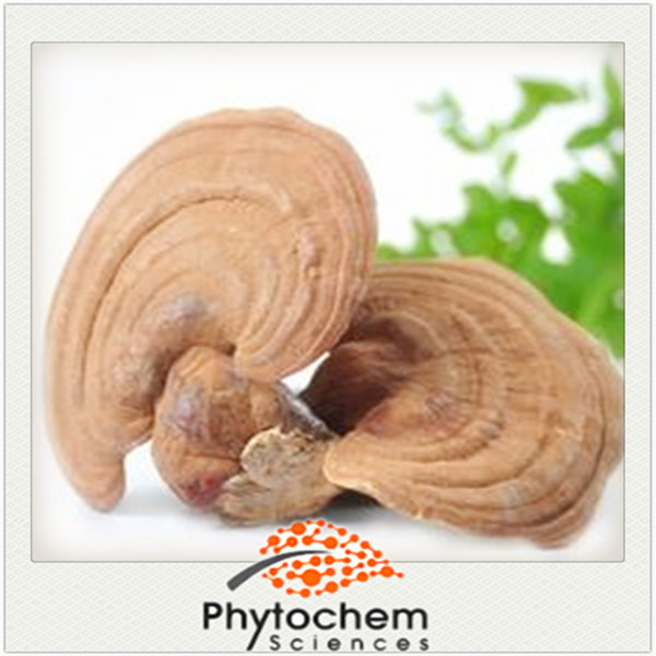 Reishi Extract Fruiting Body 30% Polysaccharides 1% Triterpenoid