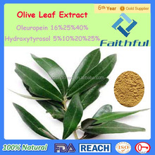 Fda Gmp Iso9001 olive leaf extract/ Natural Oleuropein Olive Leaf Extract/Oleuropein/