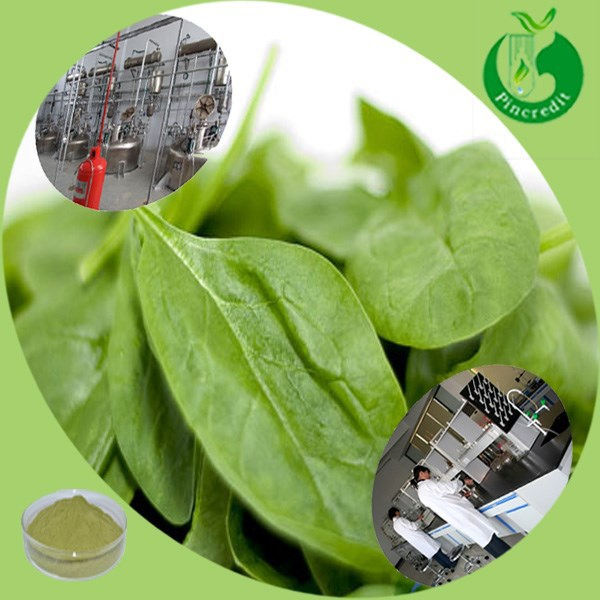 Top quality sodium copper chlorophyll/chlorophyll powder/chlorophyll unicity