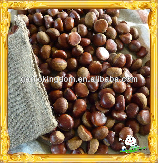 hotsale! fresh chestnut from Liaoning