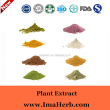 GMP Factory supply radix scutellariae extract