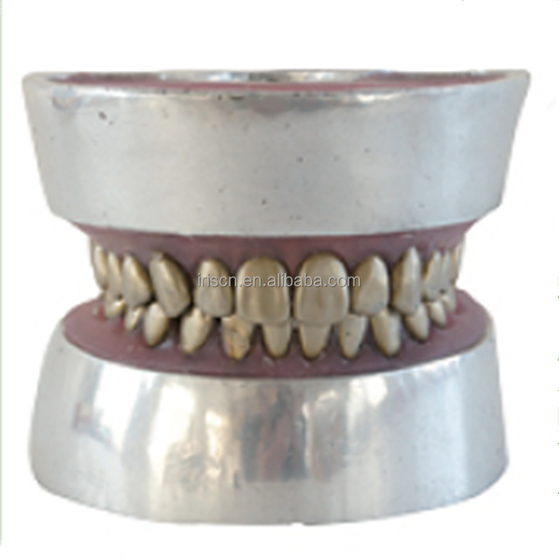 Metal teeth extraction model , Human Teeth Model