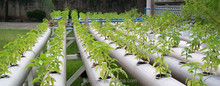 Aeroponics Portable Pvc Pipe Hydroponic System For Green Garden