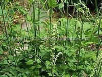 natural Black cohosh extract , say good bye to rheumatism