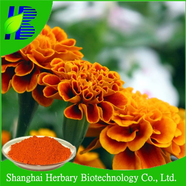 High quality marigold extract for chickens
