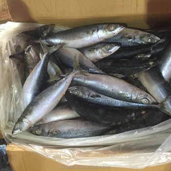 300-500g Best Quality Frozen Pacific Mackerel Fish
