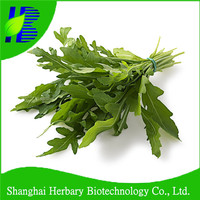 Good quality green leaf vegetable seeds Arugula seeds for cultivation