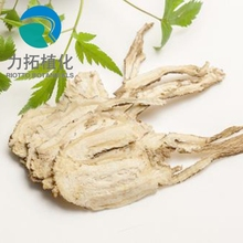 sinensis Extract dong quai extract Ligustilide 1%