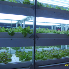 Environment-friendly controllable greenhouse hydroponics