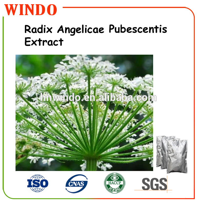 Natural Herbal Medicine Tuhuo Angelica Extract/ dong quai extract 10:1/ Lovage P.E.