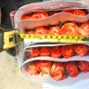 High Quality Natural Rose Flowers Fresh
