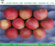 PAPER BAGGED /NONE BAGGED QINGUAN APPLE FOR SALE
