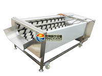 GL-380 fruit and root vegetable washinng and peeling machine ,shallot peeling machine,turnip washer and peeler