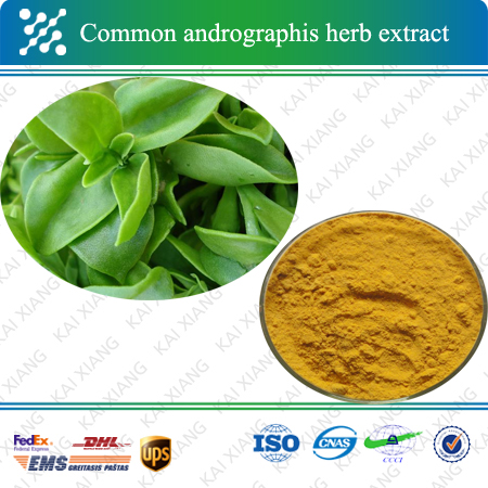 Chinese Herbal Medicine 98% Andrographolide Common Andrographis Herb Extract
