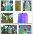 Plastic poly bag for banana fruit protection