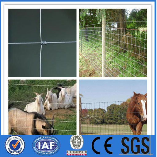 lowest price wholesale alive sheep for sale / field fence for animal ( Manufacturer & ISO9001 )