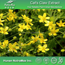 Top Quality Cat's Claw Extract Powder , Ranunculus Ternatus Thunb Extract, Ranunculus Ternatus Thunb P.E.