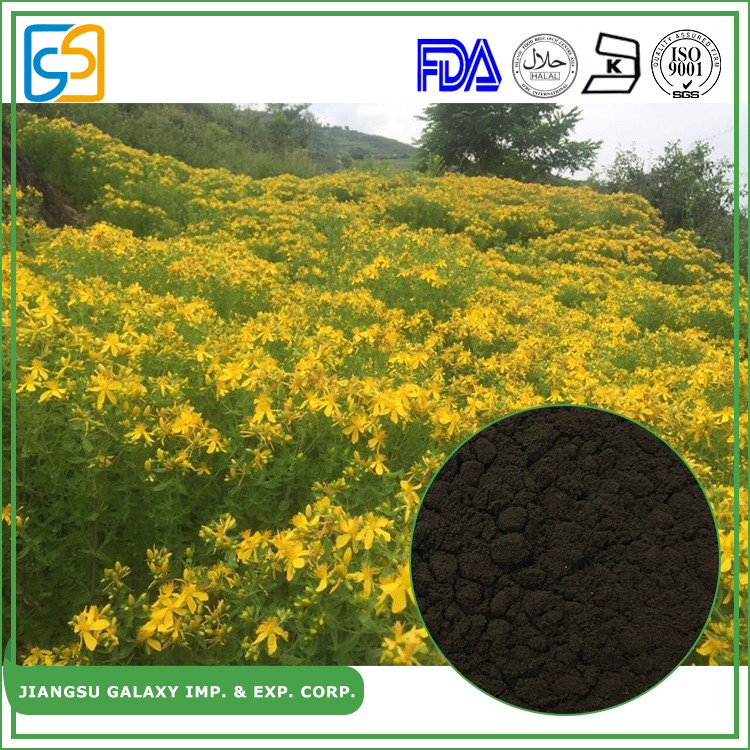 2017 well selling st john's wort extract hypericum perforatum herb