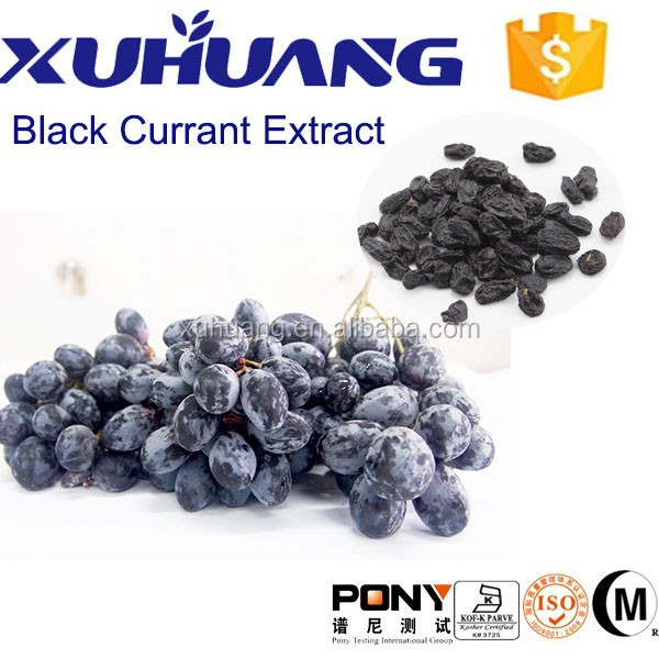 Kosher/Halal Certificate The Best Natural Herb Extract of Sliming Price Black Currant Extract
