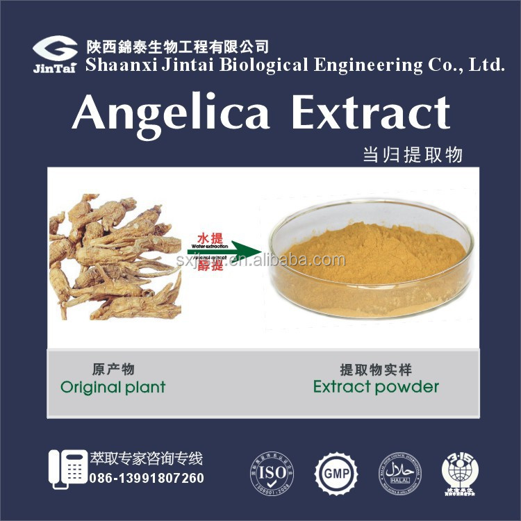 pure nature angelica sinensis/angelica extract powder