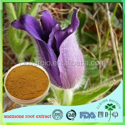 High quality Pulsatilla extract/Anemone Root Extract