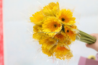 Good smell hot selling rainbow gerbera daisy flower