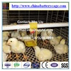 One Old Day Broiler Chicks Rearing Cage/Growing Broiler Chicken Cage